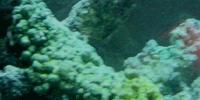 Darek Pala : Aquaria