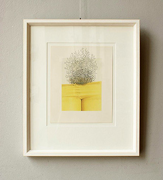 Magdalena Sawicka : Bush 1 : Lithography and ink on paper